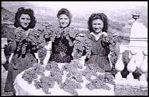Young pickers with big bunches in the twenties image
