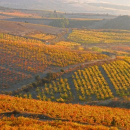 The Languedoc Countryside with Organic Leaders