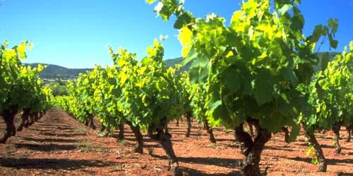 wines redsoil